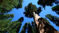 Loan portfolio management begins with forestry